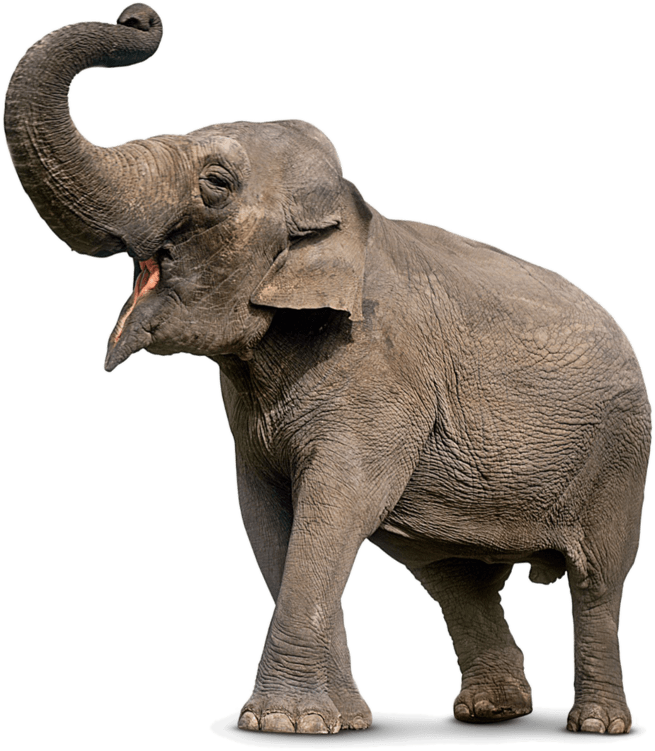 asian elephants attica zoological park indian elephant clipart indian elephant clipart